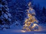 A nins…